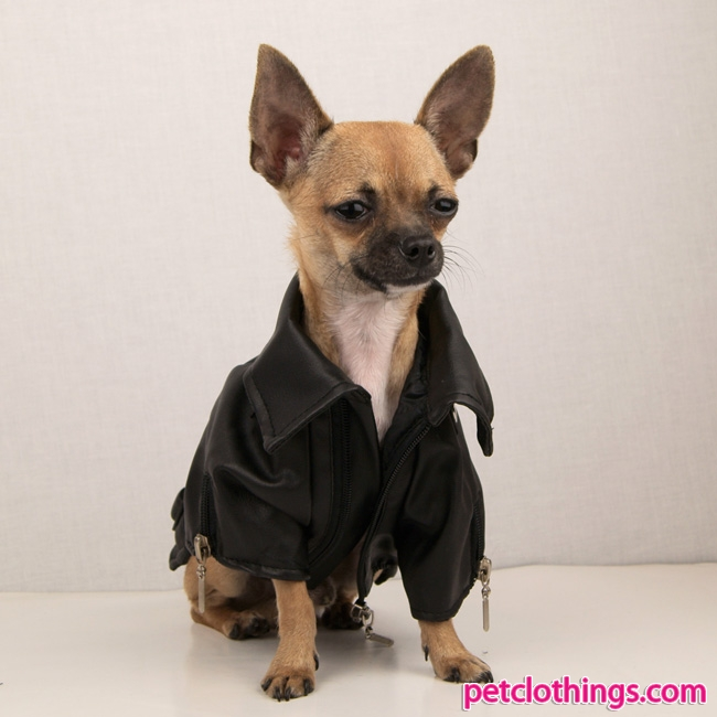 Leather jacket for dogs