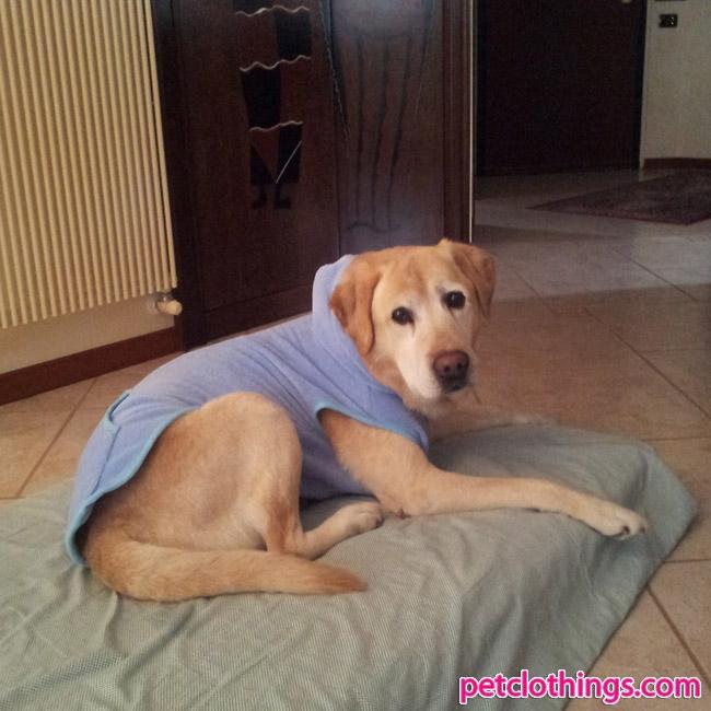 bretone hund kaufen