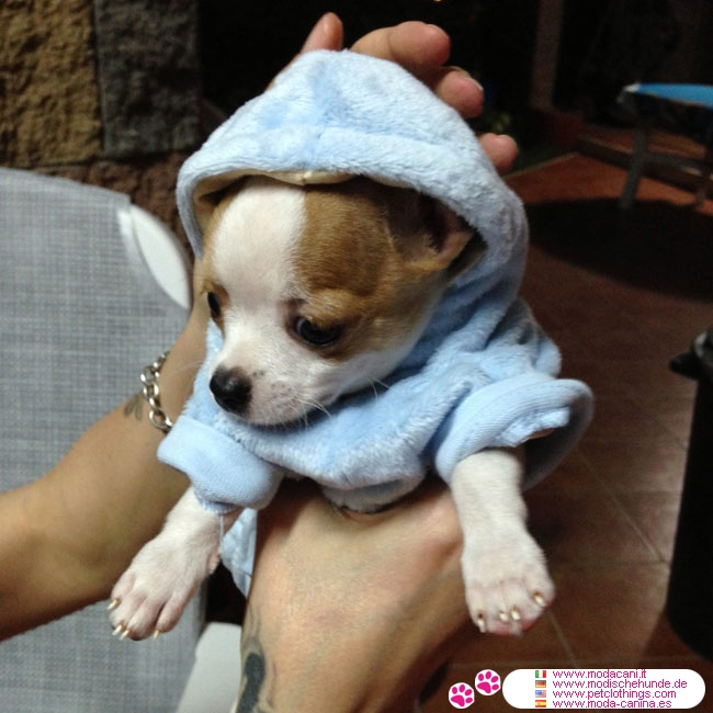 Light Blue Hoodies for for Small Dogs, very soft and velvety on the