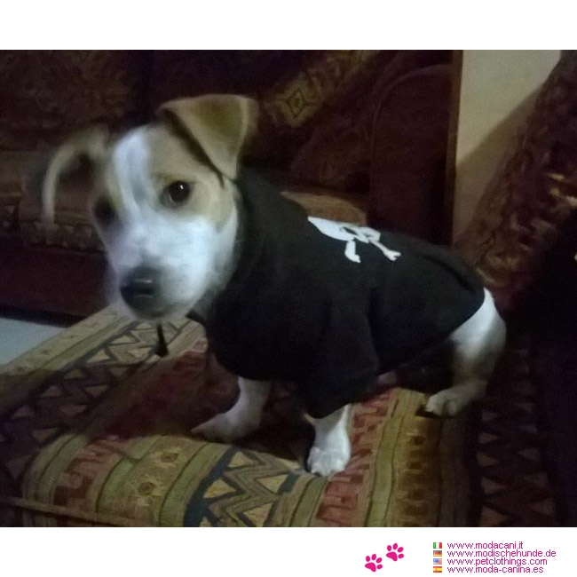 mode f r hunde hund sweatshirt schwarz mit totenkopf pulli geeignet f r welpen. Black Bedroom Furniture Sets. Home Design Ideas