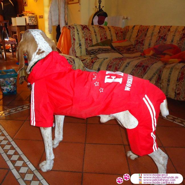regenmantel für hunde mit 4 pfoten