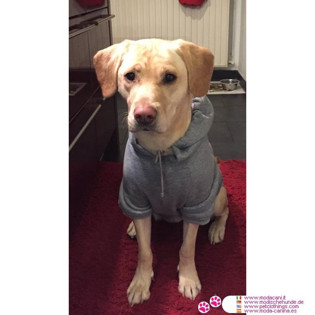 v tements pour gros chien sweat shirt uni gris pour chiens de grande taille. Black Bedroom Furniture Sets. Home Design Ideas