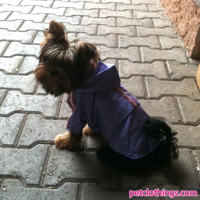 Orange Dog Raincoat -- Precious Paw Prints Boutique carries dog