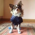 Dunkelblau Hund Jacke mit Kapuze