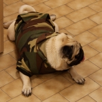 Militär Kapuzen Sweatshirt für Große Hunde