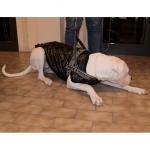 Schwarze Jacke mit Öffnung auf der Rückseite für große Hunde