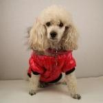 Steppjacke für Hunde in Rot