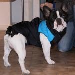 Hellblau ärmellose Jacke für Große Hunde