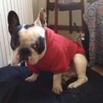 Sweat-Shirt Uni Rouge pour Chiens