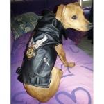 Biker-Jacke Schwarz für Hunde