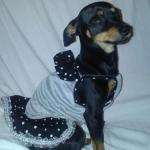 Minnie Maus Grau Hundekleider