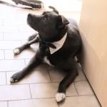 Querbinder für Hunde