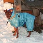 Blau Gepolstert Hundebody
