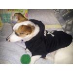 Hund Sweatshirt Schwarz mit Totenkopf