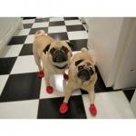 Gummi-Hundeschuhe für kleine und große Hunde
