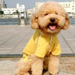 Impermeable FBI Amarillo 4 Patas para Perros Pequeños