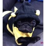 Karneval Kostüm Biene für Hunde