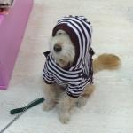 Camiseta Rayada Blanca y Marrón para Perros con Mochila