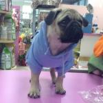 Hellblau Hoodie für Hunde