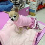 Rosa Spitzenkleid für Hund