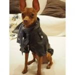 Schwarz Kunstlederjacke für Hunde