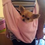 Rosa Tasche für kleine Hunde
