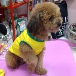 Camiseta de Fútbol de Brasil para Perros