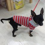 Rot und Grau gestreift Hund PoloShirt