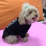 Camiseta Camelia para Perros en color Negro