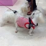 Unterhemd für Hunde in roten und weißen Streifen