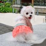 Rosa Pullover für Hund mit Rock in Tulle