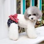 Bragas Perros Pequeños con Velcro Bandera EE.UU. Azul