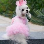 Festlichekleider in Rosa mit Tüll für Hund