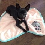 Decke für kleinen Hund aus Fleece