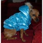 Blau Steppjacke für Hunde