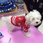 Camiseta Rayada Blanca y Roja para Perros con Mochila
