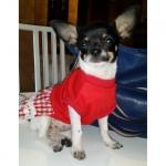 Rot Spitzenkleid für Hund