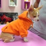 Orange Sweatshirt für Hunde