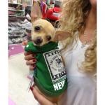 Sweatshirt für Hunde ohne Kapuze in Grün