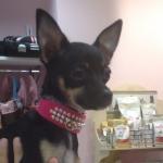Halsband für Hunde in Rosa Samt mit Perlen und Strass