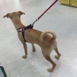 Modernen Hundegeschirr in Rosa einstellbar unter Bauch