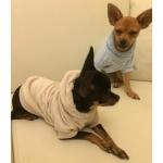 Samtig Hellbraun Hund Sweatshirt