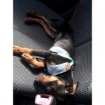 Sommer Softgeschirr für Hunde mit Leine in Blau
