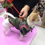 Militär Kapuzen Sweatshirt für Kleine Hunde