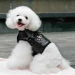 Schwarz Hundegeshirr mit flügel und Pailletten