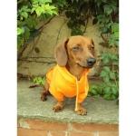 Orange Hoodie für Dachshund