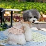 Mantel Coco Beige für kleine Hunde