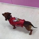 Biker-Jacke Rot für Hunde