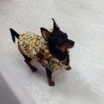 Leopard Wintermantel für kleine Hunde und Chihuahua