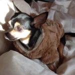 Hundemantel mit Pelz in Beige